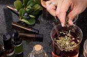 Balgam söktürücü bitkiler nelerdir ?