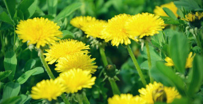 Cilt Bakımında Faydalı   Bitkiler Nelerdir ?